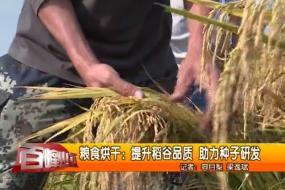 粮食烘干:提升稻谷品质 助力种子研发