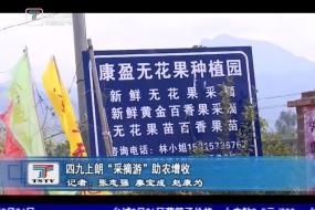 """四九上朗""""采摘游""""助农增收"""