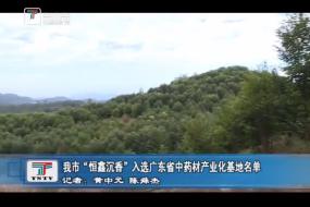"""我市""""恒鑫沉香""""入选广东省中药材产业化基地名单"""