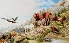 网红肌肉袋鼠去世 动物大佬们的江湖传说了解下