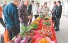 江门举办蔬菜展示会,600个新品你都吃过吗?