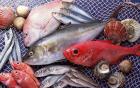 专家建议:孕妇多吃海鱼能减少早产风险