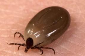 高烧不退病情危急 罪魁祸首竟是小黑虫