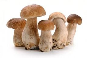 多吃蘑菇可能会有效降低患前列腺癌风险