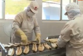 台山鳗鱼:以科技创新推动三产融合