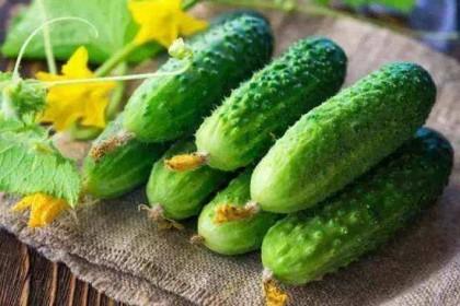 葫芦、黄瓜、丝瓜等蔬菜,一旦有苦味千万别吃