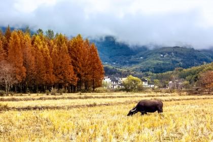 秋季旅游市场持续升温 包团出游成消费主力