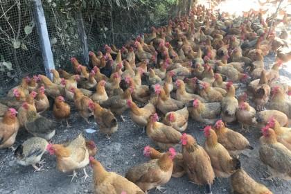 加强畜禽产品监管 守护市民餐桌上的安全