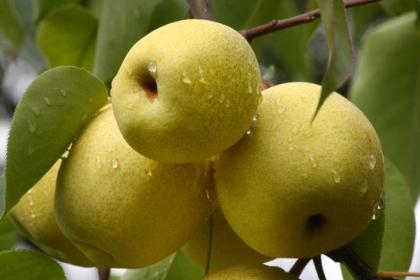 秋天干燥吃什么食物好?6种食物帮你去火滋补身体!