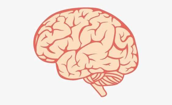 你知道吗?大脑发育不能少了十一种营养
