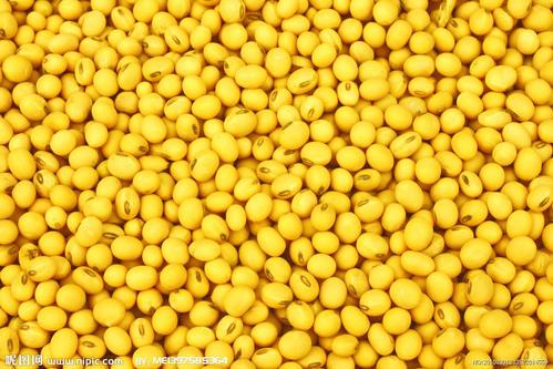 黄豆真的对心血管有益吗?