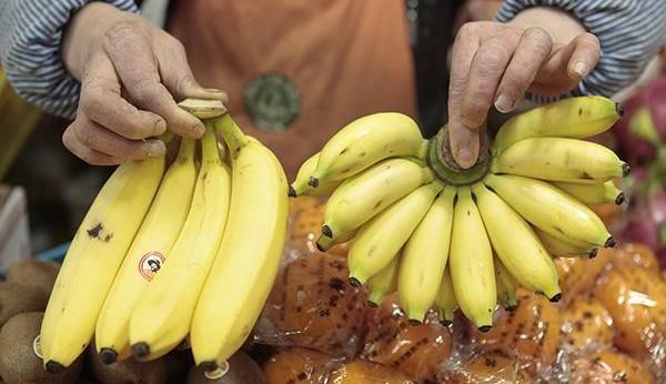 香蕉和芭蕉是同一种食物吗?便秘吃哪种?