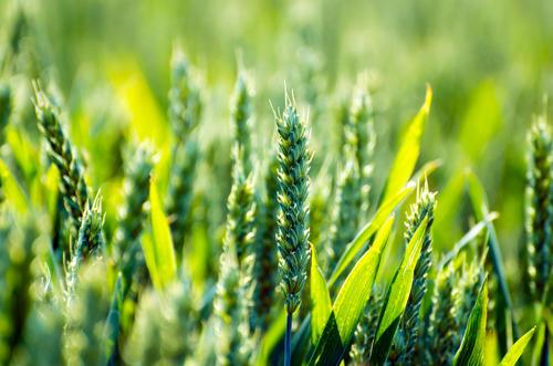 台山一园区入选省级农业科技园区建设名单
