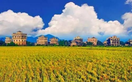 """""""十三五""""巡礼:台山农业农村工作成效显著"""