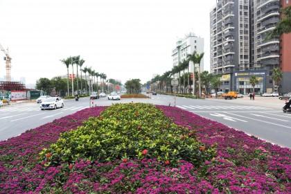 台城节日花