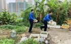 """清理""""住宅菜园"""":还地于民 助力创文"""