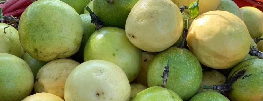 百香果成熟 进入采摘期